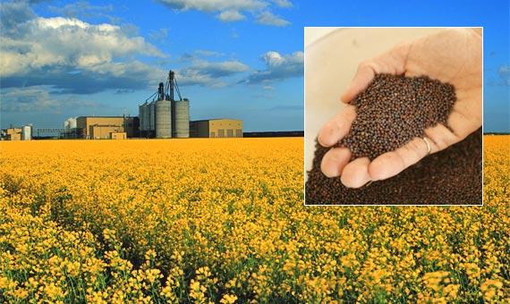 نقش کشاورزی در توسعه اشتغال آذربایجان شرقی