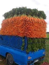 نجات بازار هویج کشور با ورود محصول  آذربایجان شرقی